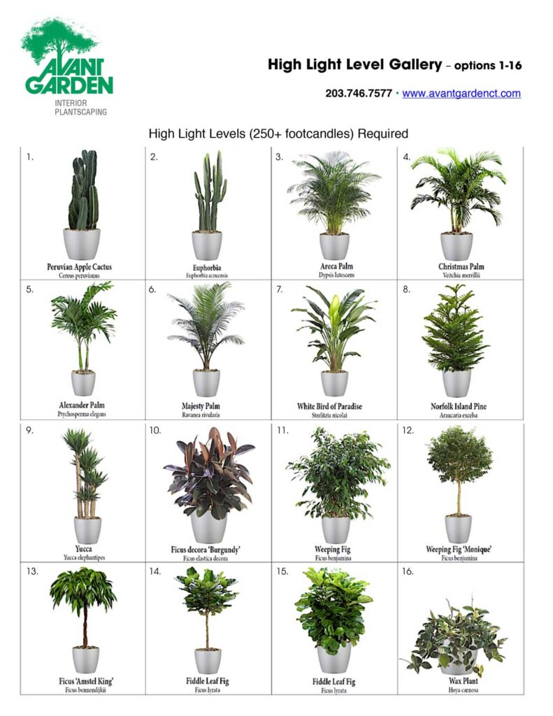 High Light Level Plant Preferences Gallery