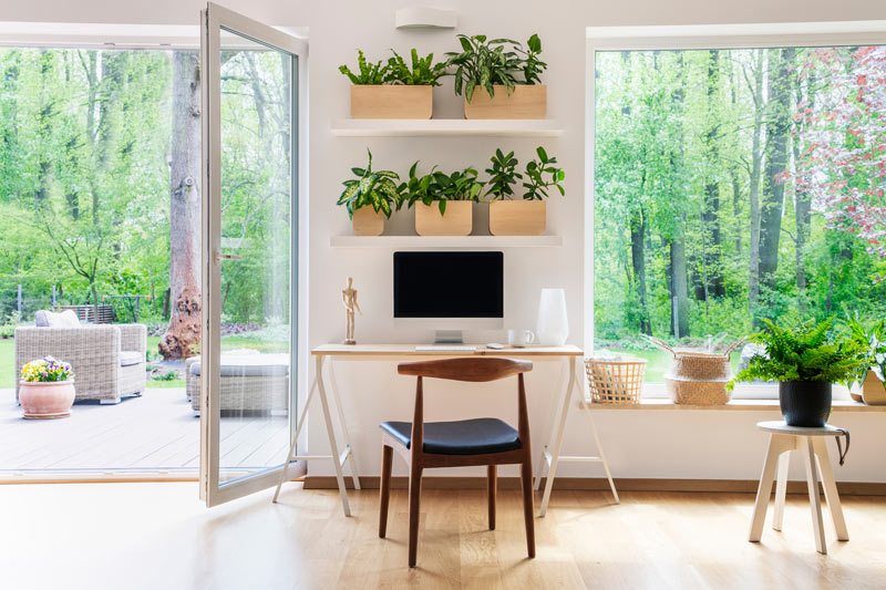 Plants in Home Workspaces